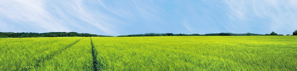 Grüne Wiese und blauer Himmel